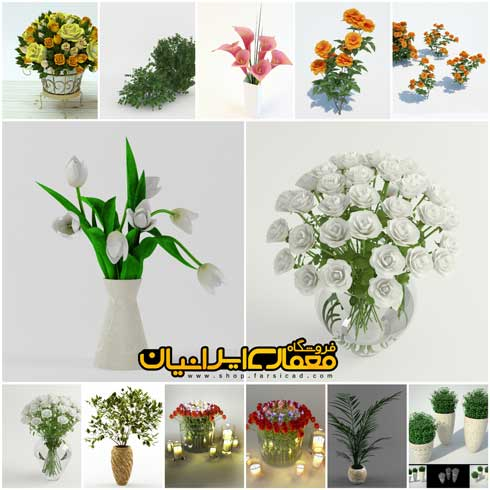 گل و گیاه کلاسیک و تزئینی و زینتی