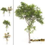 سه بعدی درخت - تری دی درخت - درخت 3d - گل خانگی